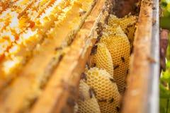 Nid d'abeilles, cadre de ruche, cadre cru de nid d'abeilles avec du miel Images stock