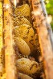 Nid d'abeilles, cadre de ruche, cadre cru de nid d'abeilles avec du miel Image libre de droits