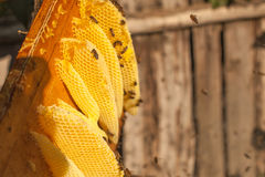 Nid d'abeilles, cadre de ruche, cadre cru de nid d'abeilles avec du miel Photo libre de droits