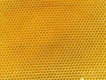 Nid d'abeilles d'or et doux Photographie stock