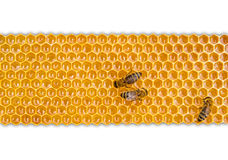 Nid d'abeilles d'isolement sur le fond blanc Image stock
