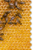 Nid d'abeilles d'isolement sur le fond blanc Images libres de droits