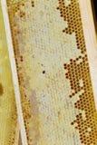 Nid d'abeilles dans la trame en bois Images stock