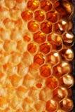 Nid d'abeilles de brûlure Photo libre de droits