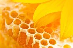 Nid d'abeilles doux avec du miel Photo stock