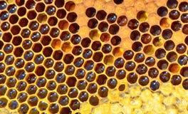 Nid d'abeilles frais Photographie stock libre de droits