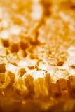 Nid d'abeilles rempli du miel Photographie stock libre de droits