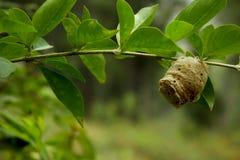 Nid d'abeilles sous une branche d'arbre photos stock