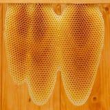Nid d'abeilles sur le cadre Photos libres de droits