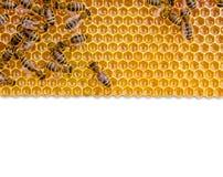 Nid d'abeilles sur le fond blanc Image stock