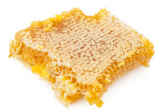 Nid d'abeilles sur le fond blanc Photos stock