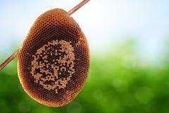 Nid d'abeilles sur le fond de ressort Photos stock