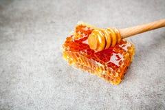 Nid d'abeilles sur le fond gris Image libre de droits