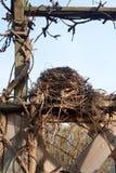 Nid d'oiseau images libres de droits