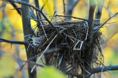Nid 3 d'oiseau Image stock