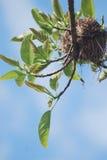 Nid d'oiseau Image stock