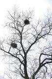Nid d'oiseau Photos libres de droits