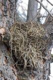 Nid d'oiseau dans la fin d'arbre  Images libres de droits