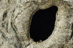 Nid d'oiseau dans le tronc d'arbre creux Photos libres de droits