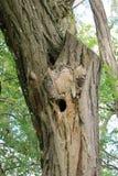 Nid d'oiseau dans un arbre, alpes françaises photographie stock libre de droits