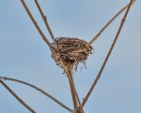 Nid d'oiseau dans un arbre - pris près de la rivière du Minnesota image libre de droits