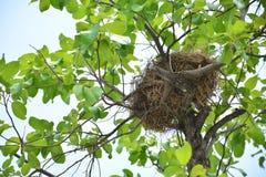 Nid d'oiseau sur la branche avec des oeufs d'oiseau pour nouveau-né photographie stock libre de droits