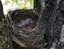 Nid d'oiseaux dans la forêt Image stock