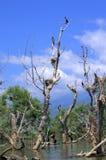 Nid d'oiseaux sur les arbres morts Image stock