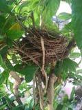 Nid d'un oiseau Photographie stock libre de droits