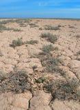 Nid d'un plus grand leschenaultii de Charadrius de pluvier de sable Image libre de droits