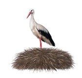 Cigogne dans son nid. Ressort Photo libre de droits