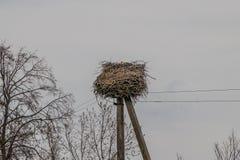 Nid de cigogne sur le poteau ?lectrique image libre de droits
