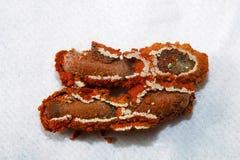 Nid de guêpe, colonie de lait d'Aarey, INDE Photo libre de droits