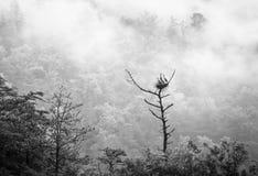 Nid de héron de grand bleu après pluie Photos stock