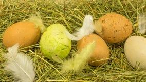 Nid de nature de Pâques avec des plumes Photos libres de droits