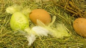 Nid de nature de Pâques avec des plumes Image libre de droits