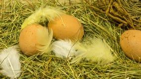 Nid de nature de Pâques avec des plumes Photographie stock libre de droits