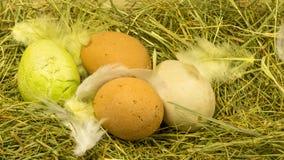 Nid de nature de Pâques avec des plumes Photographie stock