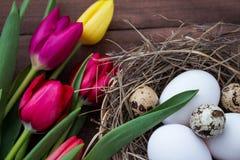 Nid de Pâques avec des oeufs d'oiseau et des tulipes vivantes Photo libre de droits