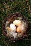 Nid de Pâques avec des oeufs sur l'herbe Photographie stock