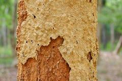 Nid de termite Image stock