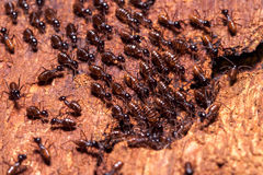 Nid de termite Images stock