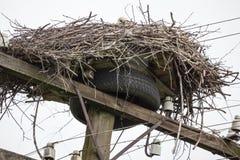 Nid des cigognes blanches au sommet d'une colonne de câble avec des fils Photographie stock libre de droits