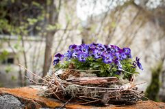 Nid des fleurs image stock