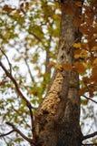 nid des guêpes sur un arbre image libre de droits