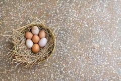 Nid des oeufs organiques de poulet de gamme gratuite images libres de droits