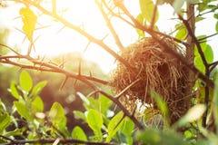 Nid du ` s d'oiseau sur l'arbre Photo stock