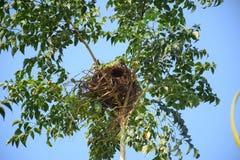 Nid du ` s d'oiseau sur l'arbre Images stock