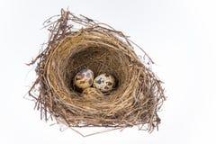 Nid et oeufs d'oiseau photographie stock libre de droits