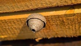 Nid gris de guêpe sur le faisceau en bois Ruche sur le grenier Foyer sélectif Fin vers le haut photos stock